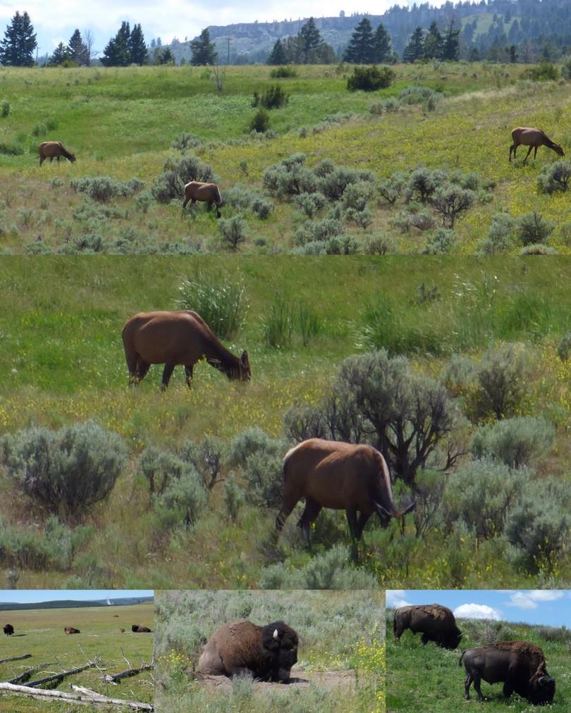 2015-06-26 Yellowstone4