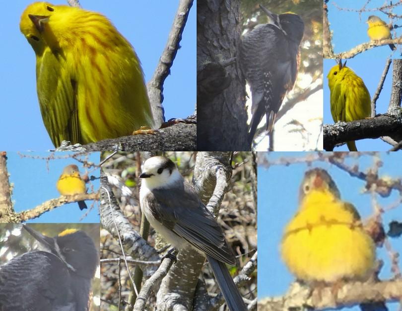 2016-05-10 Adirondack Avian Adventures
